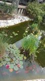 Dammet blommar oldtown Arkivfoto