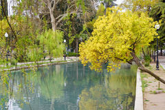 Dammet i ett härligt parkerar Arkivbild