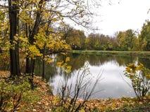 Dammet i parkera Fotografering för Bildbyråer