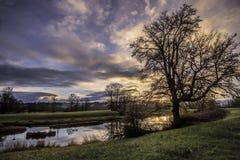 Dammet med det bakbelysta trädet och gräsplan betar arkivbilder