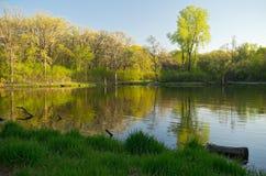 Dammet och den frodiga skogen av Battle Creek parkerar Arkivfoto