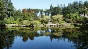 Dammet reflekterar härligt landskap Royaltyfri Bild
