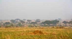 Dammig väg i savann Arkivbilder