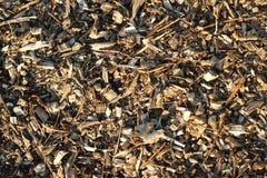 Dammigt trä för sågspån, filialer textur Arkivbild
