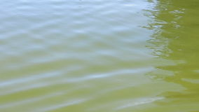Dammvattenvågor stock video