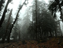Damp forest Stock Photo