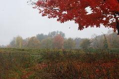 Damp mid fall day in a field in New England. Red, orange yellow falling leaves trees up front and in distance Stock Photo