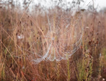 Damp web against the grass background. Web with dew drops against the background of meadow herbs Royalty Free Stock Photos