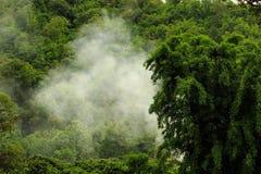Dampf im Wald Lizenzfreies Stockfoto