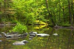 Dampf tief im Wald Lizenzfreie Stockfotos