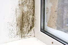 Free Dampness Royalty Free Stock Images - 12473609