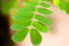 Dampness roślina zdjęcie stock