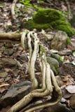 Dampness roślina Zdjęcie Royalty Free