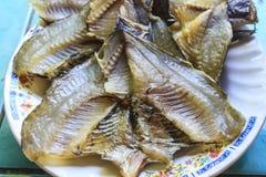 Damsel fish Royalty Free Stock Image
