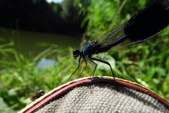 Damsel fly on shoe Royalty Free Stock Images