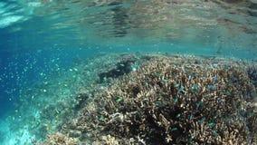 Damselfish and Shallow Reef in Raja Ampat stock footage