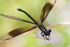 Damselfly. Mix with green color Stock Photography