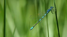 Damselfly, Dragonfly, Dragonflies And Damseflies, Insect stock photos