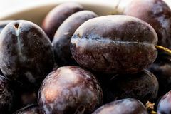 Damson Plum in a bowl. Organic Food Concept Royalty Free Stock Image