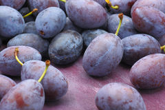 Damson plum (damascene) fruits Stock Images