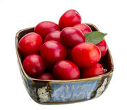 Damson plum Stock Photography