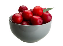 Damson plum Royalty Free Stock Photography