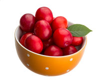 Damson plum Royalty Free Stock Image