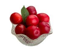 Damson plum. Isolated on white background Royalty Free Stock Image