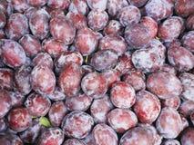 Damson plum market Stock Image