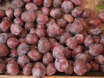 Damson plum market Royalty Free Stock Photo