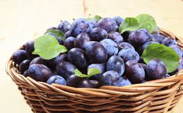 Damson plums stock photo