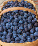 Damson Plums. At a produce stand Royalty Free Stock Photos