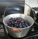 Damsons ready for jam making royalty free stock photography