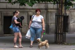 Damtoalett med hundar fotografering för bildbyråer
