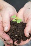 Damträdgårdsmästare Tenderly Cupping Seedling och jord i händer royaltyfri fotografi