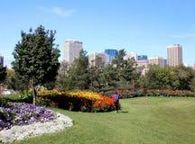 Damvisningen blommar framme av stadshorisont royaltyfria foton