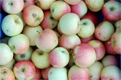Damy jabłko Zdjęcia Royalty Free