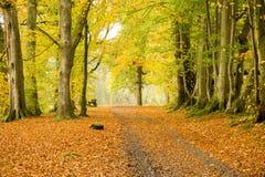 Damy Mary spacer, Crieff, Szkocja, UK Zdjęcie Stock