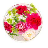 Damy ` s róże i salopa obrazy royalty free