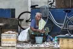 Damy sprzedawania ryba i kraby przy Negombo Rybim rynkiem w Negombo, Sri Lanka Obrazy Royalty Free