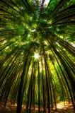 damyang bambusa las zdjęcia stock