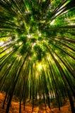 damyang bambusa las obrazy stock