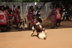 Dança africana tradicional em Mantenga, Suazilândia, África meridional, curso, Fotografia de Stock