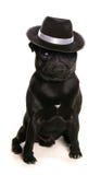 Dança canino Fotos de Stock