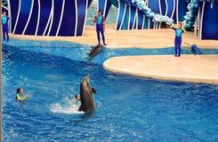 A dança do golfinho e o outro golfinho que relaxam na associação em dias do golfinho de Seaworld mostram foto de stock royalty free