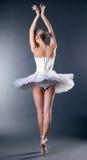 Dança magro graciosa da bailarina de volta à câmera Fotografia de Stock