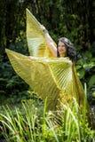 Dançarino com as asas douradas do Isis Imagem de Stock