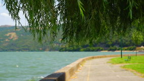 Danúbio no verão com árvore e vento de salgueiro video estoque