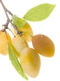 Dan fruto los ciruelos dulces amarillos maduros imágenes de archivo libres de regalías