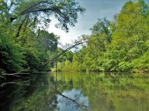 Dan River Calm Water Reflections. Trees reflect on the calm, glassy surface of the Dan River near Danbury, North Carolina Stock Photos
